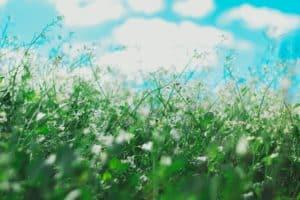 flowers causing allergies